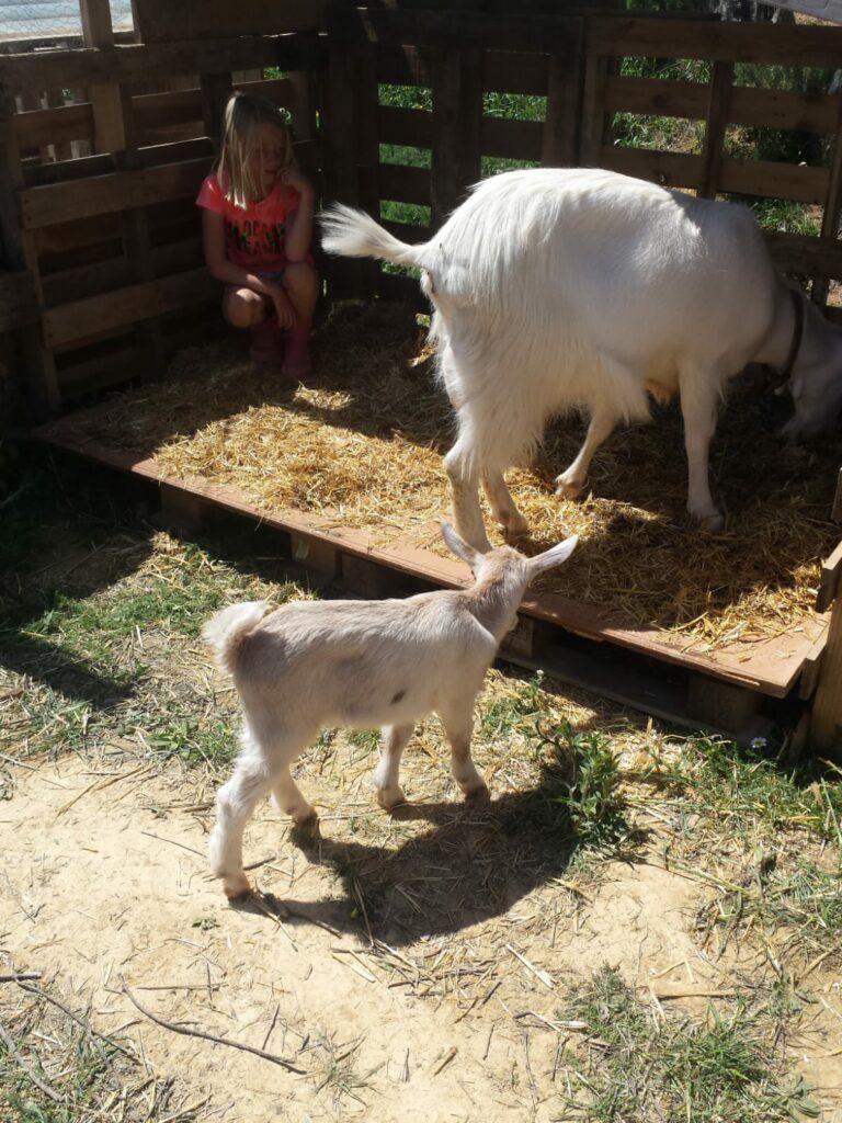 Mamma capra e capretta