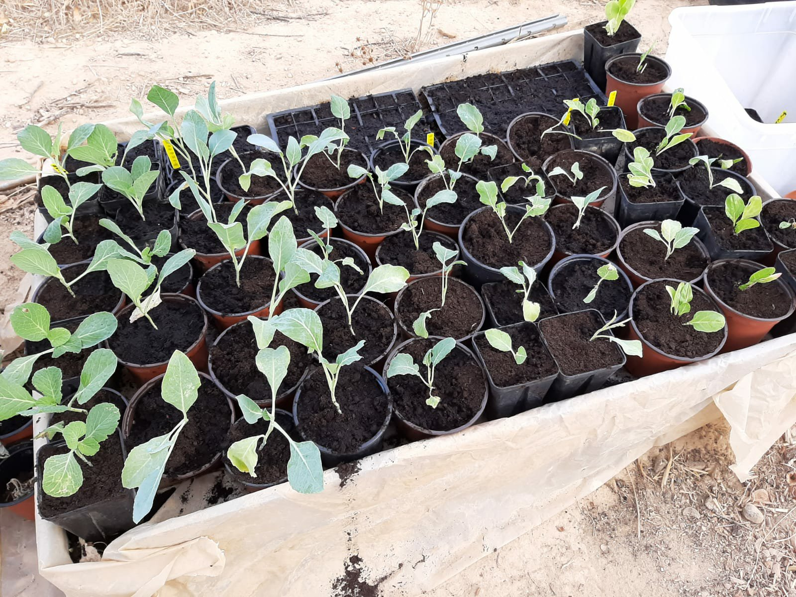 Volunteer day in the permaculture veggie garden.