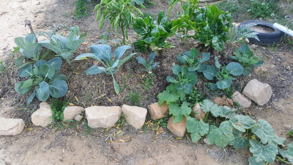 Il nostro orto di permacultura