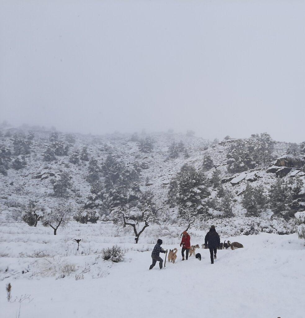 I cani vanno portati a spasso anche durante le tempeste di neve!