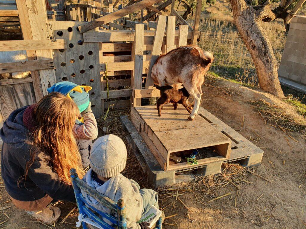 La famiglia Gibson guarda le caprette