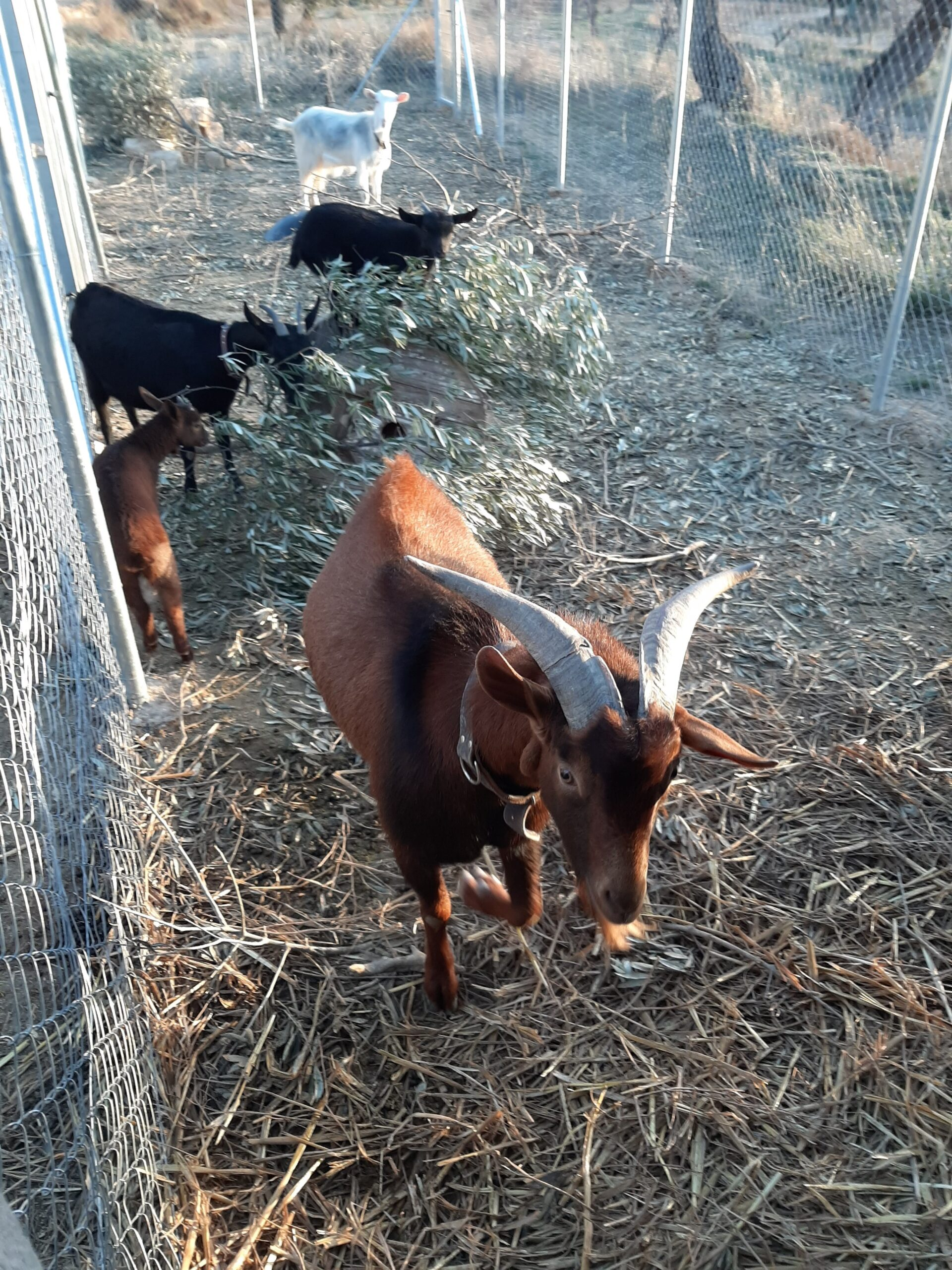 What's new in February at the Freedom Farm?
