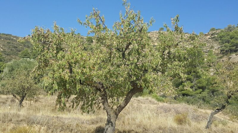 Freedom Farm Organic Almonds Spectacular Giveaway.